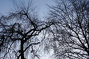 Winter trees silhouette<br /> *ADD TO CART FOR LICENSING OPTIONS*