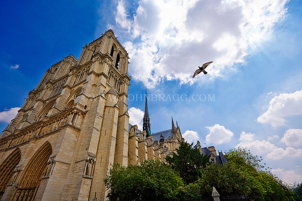 Photo looking up at a bird flying in the sky outside of  Notre Dame Cathedral in Paris, France