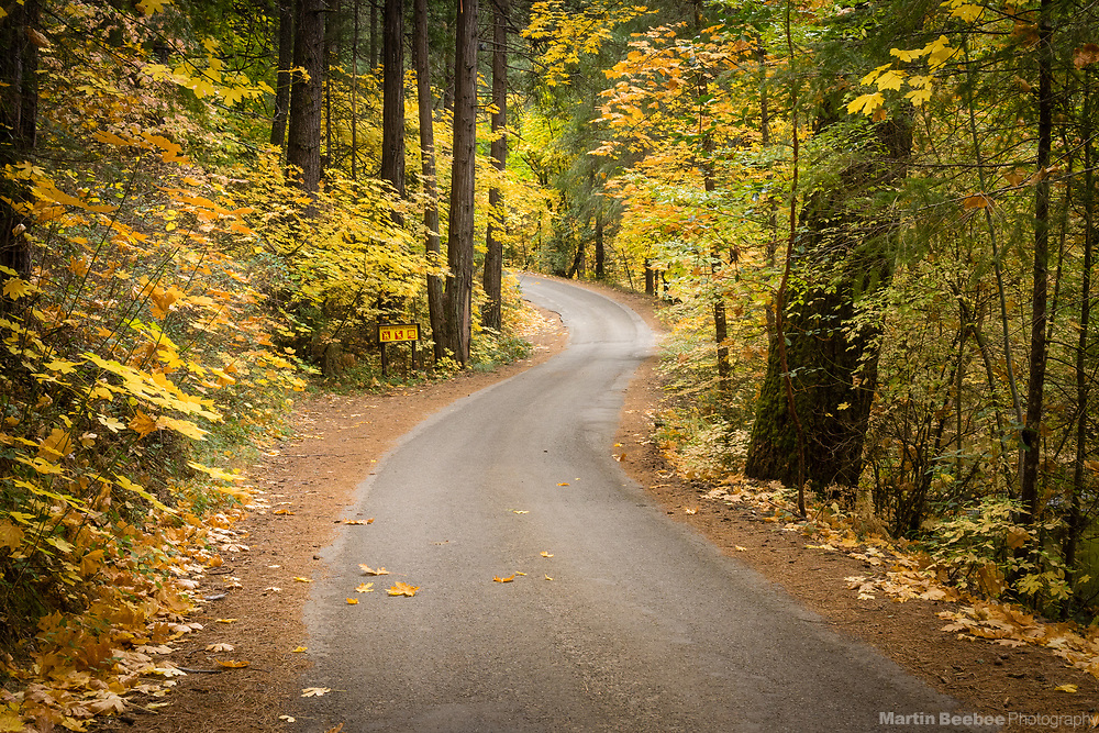 Country road winding through forest with fall colors, El Dorado County, California