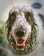 Eastern Dog Club - Duxbury