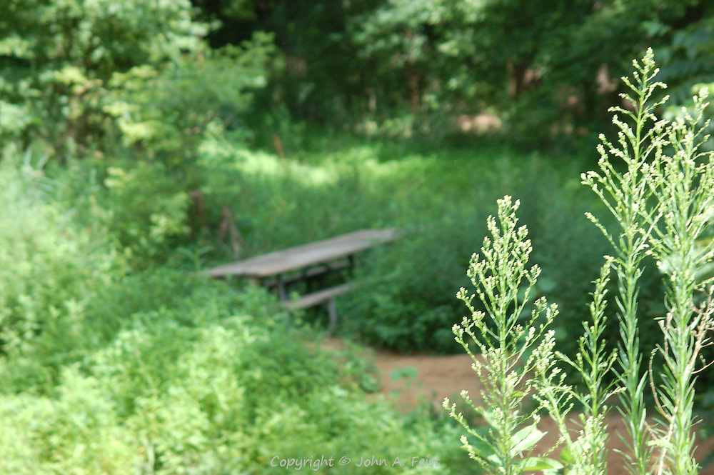 I don't think anyone has used this table in a while.  Nature is quickly taking it back.  Along the D and R Canal in Hillsborough, NJ