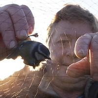 15/11/10 Spurn Head , East Yorkshire - Paul Collins , bird ringer at the Surn Bird Observatory 15/11/10 Spurn Head , East Yorkshire - Paul Collins , bird ringer at the Spurn Bird Observatory
