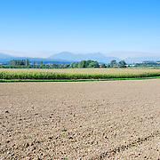 Farm field and trees in Austria with Alps in the horizon