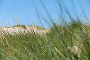 Porthtowan dune sand