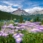 beautiful two medicine valley, two medicine lake rising wolf mountain, glacier national park, blowing flowers cloudy sky