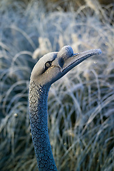Detail of bronze swan sculpture with hoar frost