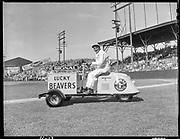 """""""Lucky Beavers opening game. April 16, 1947"""" Beavers vs. San Francisco Seals at Vaughn St. Stadium.  Governor Earl Snell driving 3 wheel Lucky Beavers car in front of a full stadium. Photo by Al Monner."""