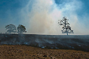Charred trees and smoke is all that is left of a field along CR 426 in Smith County as fires continue to ravage East Texas for the fifth consecutive day.© 2011 Jaime R. Carrero/Tyler Morning Telegraph