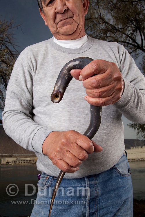The late Elmer Crow Jr., a Nez Perce Elder and technical supervisor for the Nez Perce Department Of Fisheries Resources Management, holds an adult Pacific Lamprey (Lampetra tridentata) before placing it in a holding tank. The Columbia River and the John Day Dam are in the background. Pacific Lamprey, often described as a trash fish, are in significant decline and are important to the tribes of the Columbia River Basin icnluding the Nez Perce. They are also important to the ecology of the river and tributary ecosystem.