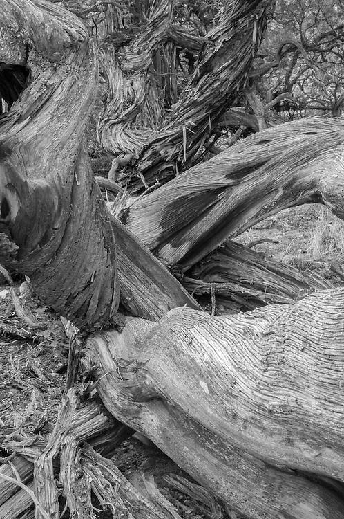 Woven Cypress