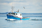 A blue and white lobster boat sails across a calm sea as hungry seagulls follow in its wake, hoping to steal some bait.