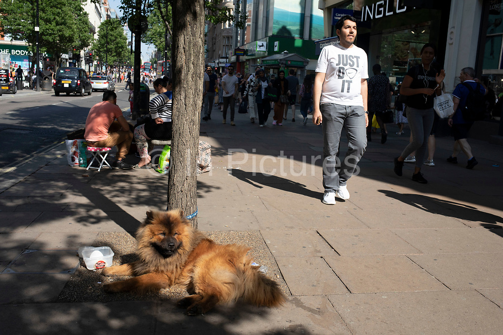 Dogs take a rest from the blazing sun on a hot day on Oxford Street in London, England, United Kingdom. This family has the dogs as an added attraction while playing music for money on the street.