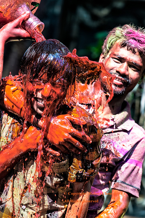 Red Holi: Celebrating Holi, a laughing young man is held by his friends while a large container of red coloured water is emptied over his head, Kolkata (Calcutta) India.