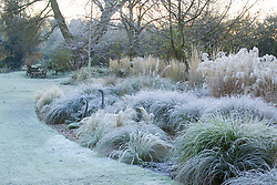 Looking across the grasses border in John Massey's garden on a frosty winter's morning. Bronze swan and woven deer sculptures. Design: John Massey, Ashwood Nurseries