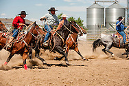 Will James Roundup, Ranch Rodeo, Cow Milking, Running Iron and Hill Ranch Teams, Hardin, Montana.