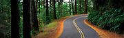 Mt Tam Road