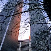 World Trade Center behind tree branches, Manhattan, New York City, New York, USA