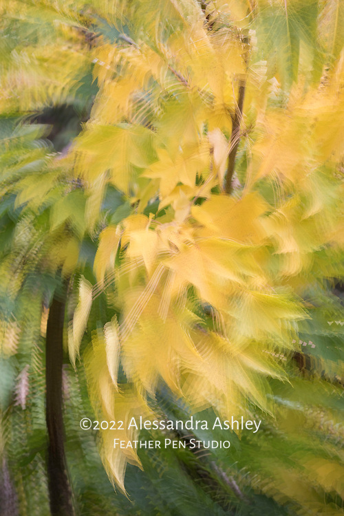 Golden autumn foliage enhanced wih in-camera multiple exposure rotate and zoom (MERZ) effect.