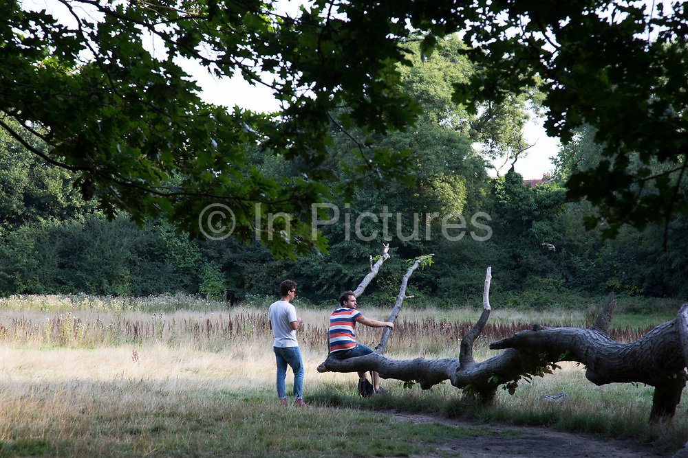 """friends sit chatting on an old fallen tree stump. Hampstead Heath (locally known as """"the Heath"""") is a large, ancient London park, covering 320 hectares (790acres). This grassy public space is one of the highest points in London, running from Hampstead to Highgate. The Heath is rambling and hilly, embracing ponds, recent and ancient woodlands."""