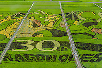 Gyoda is a mostly flat city full of rice paddies. One of these paddies has been turned into a giant artistic canvas. Different strains of rice, which grow into a variety of colors, are planted in a pattern in spring. Each year the pattern's theme changes.  In 2016 the theme is Dragon Quest from the game app. As the rice grows, the picture is revealed. The Japanese call this tambo art. Gyoda holds the Guiness World Record for the World's Largest Rice Paddy Art.  The tanbo art of Gyoda began in 2008 with 433 locals who participated in the tanbo art rice planting event.  Each year the number grow, as the image to be planned and planted is changed. This turns the entire rice field into a canvas for a huge painting that can only be fully appreciated from the nearby tower.