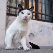 """VENICE, ITALY - AUGUST 27:  A stray cat poses in a """"campo"""" on August 27, 2011 in Venice, Italy. Dingo is the Anglo-Venetian association part of the AISPA,  founded in 1965 by Helen Saunders and Elena Scapabolla and is devoted to the welfare of venetian stray cats. Cats in Venice"""