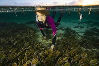 Dr. Sylvia Earle snorkels in a sea grass meadow, Denis Islands Seychellys