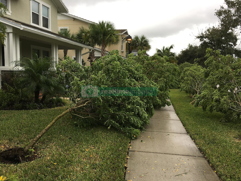 October 7, 2016 - Florida, U.S. - Small trees block the sidewalk following the passing of hurricane Matthew in the Mallory Creek neighborhood of Abacoa in Jupiter on October 6, 2016. (Credit Image: © Richard Graulich/The Palm Beach Post via ZUMA Wire)