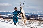 A Tsaatan reindeer herder and his reindeer (Rangifer tarandus) standing on its hind legs up in the mountains, Khovsgol Province, Mongolia