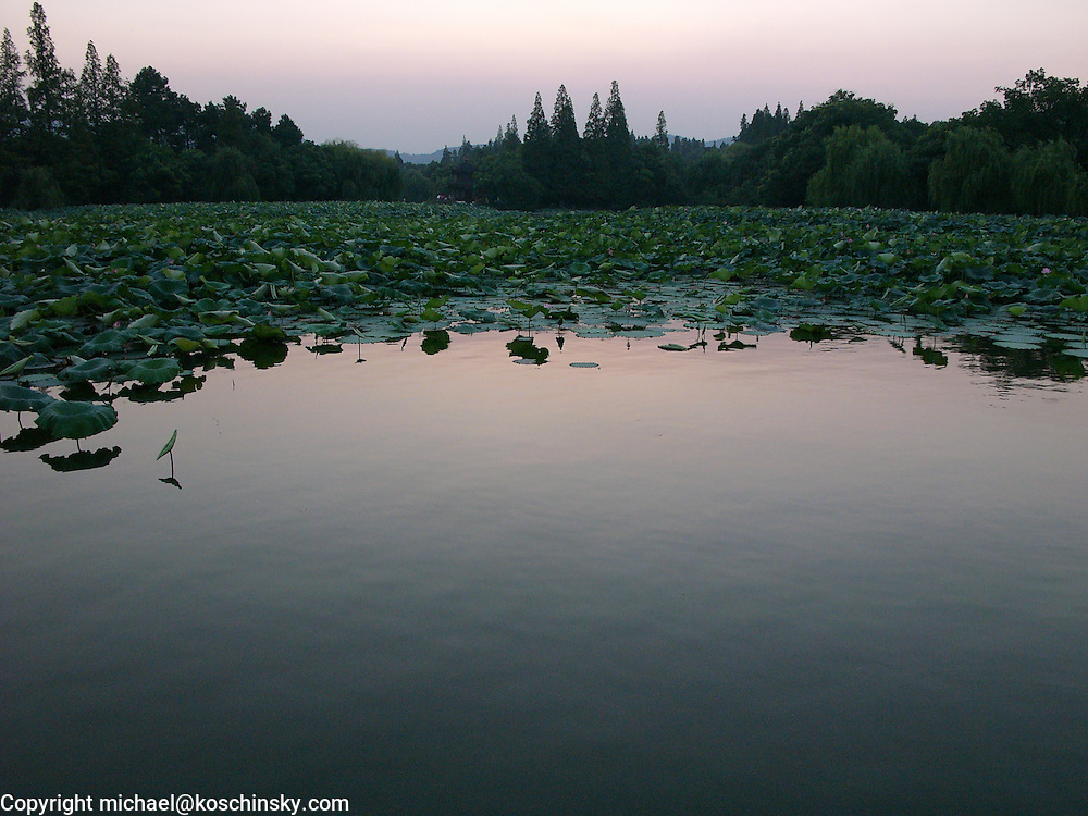 Pond with Lotus in foreground, forest in background, landscape