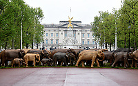 Joanna Lumley thaking part The Elephant Family's CoExistence campaign  exhibition featuring elephant sculptures crossing The Mall  london  May 15, 2021photo by Krisztian  Elek