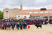 Local people challenging bull with red flag during traditional festival at Madrigal de los Altas Torres in province of Avila, Spain