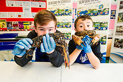 Pictured: Connor Coulter and Kieran Head preferred the shellfish on the lobster and crab variety<br /> <br /> The Seafood in Schools project, which aims to teach children about Scottish seafood, visited Craigroyston Community High School today where 260 children took part in workshops with the opportunity to view and handle fresh and live species, including crab and lobster.<br /> Ger Harley | EEm 7 June 2016