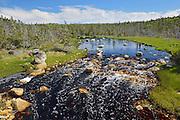 Creek and boreal forest<br /> Near Tor Bay<br /> Nova Scotia<br /> Canada