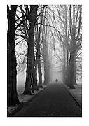 Foggy morning on The Grove, Alexandra Park