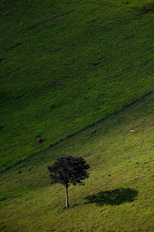 Jeceaba_MG, Brasil...Arvore na paisagem rural de Jeceaba...The tree in the rural landscape in Jeceba...Foto: JOAO MARCOS ROSA /  NITRO
