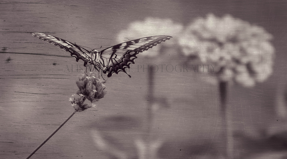 """Click on """"ADD TO CART"""" to view list of print options and pricing.<br /> <br /> Note: original file size of images used for fine art printing are larger than those being displayed on website."""