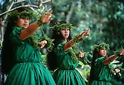 Hula Halau, Hilo, Island of Hawaii