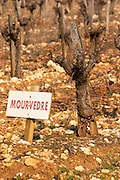 Mourvedre vine and sign at La Truffe de Ventoux truffle farm, Vaucluse, Rhone, Provence, France