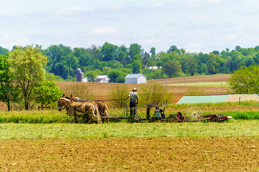 Gordonville, PA, USA / May 25, 2020: An Amish farmer uses a team of horses to cut hay in a Lancaster County field on a bright summer day.