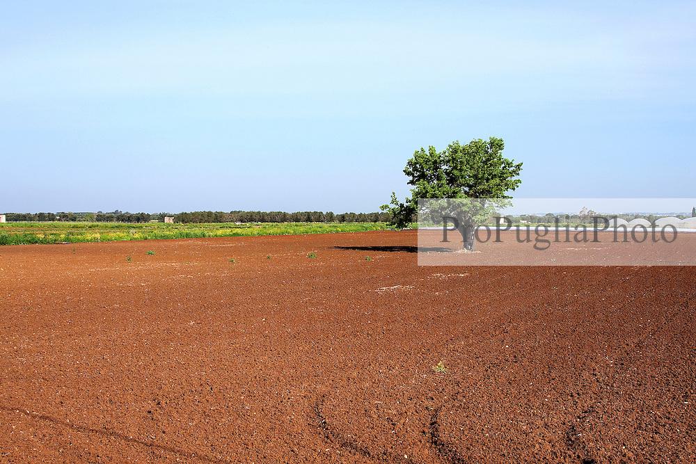 Campo appena arato con albero. Nelle immediate vicinanze del bacino le terre vengono coltivate dai contadini della zona. Proprio questa categoria è la piu danneggiata dalle continue esondazioni del bacino, che invade le loro terre e ne impedisce lo sfruttamento.