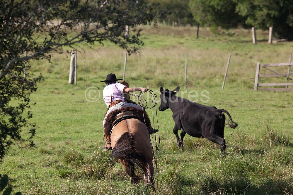 Young boy Gaucho cowboy Brazilian riding a horse, rounding up cattle. Working Gaucho Fazenda in Rio Grande do Sul, Brazil.