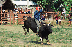 Rodeo in Cuba; with man riding bull being bucked,
