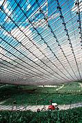 PUERTO RICO, ARECIBO world's largest radio observatory