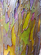 Peeling tree trunk Close-up