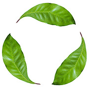 recycle logo created with a photograph of three green leaves on white background