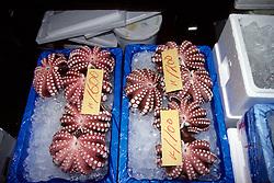 Octopus At Tsukiji Fish Market