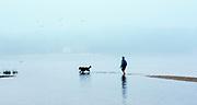 Walking dog at low tide, Cape Cod, Massachusetts, USA.