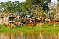 Rebanho de Bovinos em fazenda de Encruzilhada do Sul. FOTO: Jefferson Bernardes/Preview.com