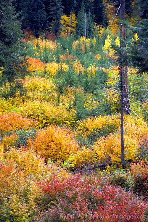 North America, USA, Washington. Autumn colors in the Cascade mountains of the Pacific Northwest.