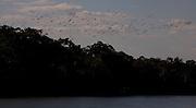 Ibiai_MG, Brasil...Rio Sao Francisco, o rio da integracao nacional. Na foto passaros voando sobre o rio...The Sao Francisco river, It is an important river for Brazil, called the river of national integration. In this photo, the birds flying over the river...Foto: LEO DRUMOND / NITRO